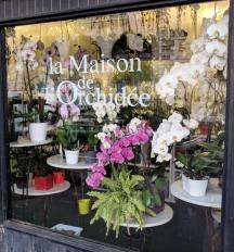 Paris Shop Window 10
