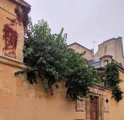 Paris Garden 1